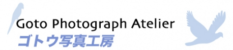 東京の出張撮影(お宮参りや七五三、家族写真)ならゴトウ写真工房